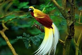 Penyanyi Hutan Sunyi
