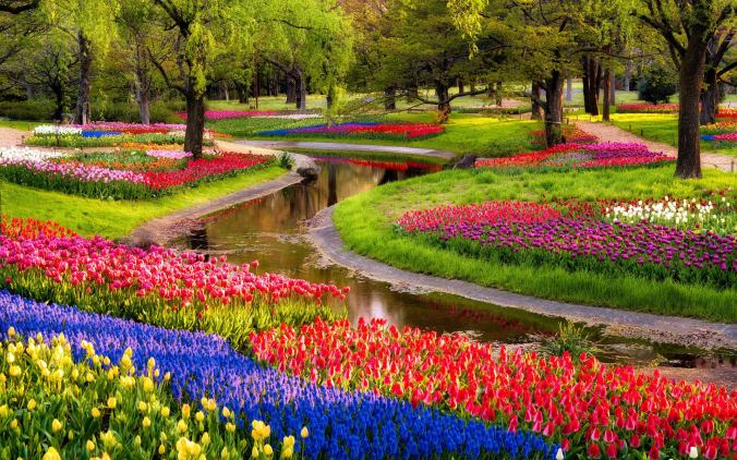 beautiful-flowers-garden